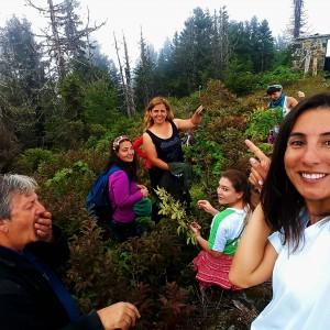Karadeniz pokut'ta Yoga Kampımız Canan Korkmaz ve Ali Dayı ile organik yaban mersinleri topluyor.