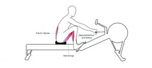 Kürek antrenmanında erector spinae, hamstringler, gastrokinemius ve soleus. kasları.
