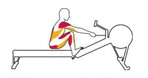 Kürek antrenmanı yakalayış aşamasında çalışan ve esneyen kaslar. (Kırmızılar çalışan kaslar, sarılar esneyen.)