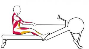 Kürek antrenmanı sırasında sürüş aşamasında çalışan kaslar kırmızı, esneyen kaslar sarı ile gösterilmiştir.