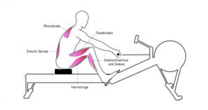 Kürek antrenmanında sürüşün 1. aşaması ve çalışan, esneyen kaslar.