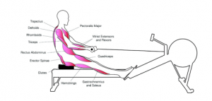 Sürüşün 2. aşamasında hemen hemen bütün vücut kasları devrede.